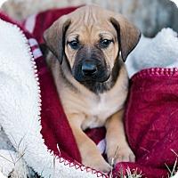 Adopt A Pet :: Pendleton $250 - Seneca, SC
