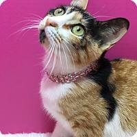 Adopt A Pet :: Bella - Pasadena, TX