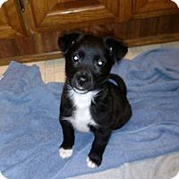 Adopt A Pet :: Jingles - Pittsboro, NC