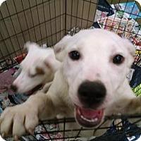 Adopt A Pet :: Blizzard - Pembroke, GA