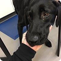 Adopt A Pet :: Molly - Cumming, GA