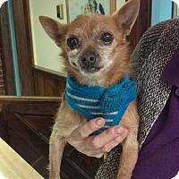 Adopt A Pet :: George - south plainfield, NJ