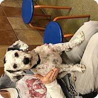 Adopt A Pet :: Dre - Long Beach, CA