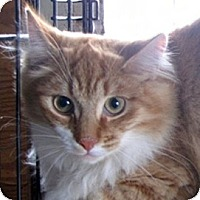 Adopt A Pet :: Clarence - Mississauga, Ontario, ON