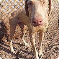 Adopt A Pet :: Casper - Fillmore, CA