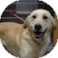 Adopt A Pet :: Yogi - Denver, CO