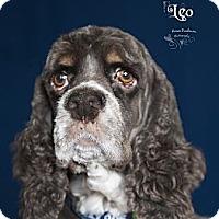 Adopt A Pet :: Leopold ( Leo ) - Rancho Mirage, CA