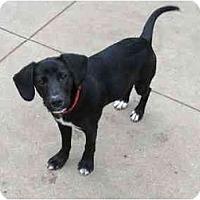Adopt A Pet :: Rascal - Wahoo, NE