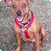 Adopt A Pet :: Debra - Nashville, TN