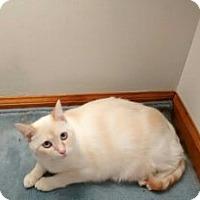 Adopt A Pet :: Ember - Saint Albans, WV