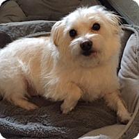 Adopt A Pet :: PENNI - Salt Lake City, UT