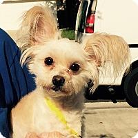 Adopt A Pet :: Fifi - Orlando, FL