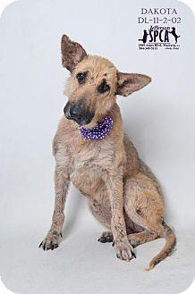 Shepherd (Unknown Type) Mix Dog for adoption in Marrero, Louisiana - Dakota  - In Foster Home