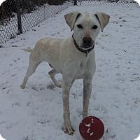 Adopt A Pet :: YUKON - Medford, WI