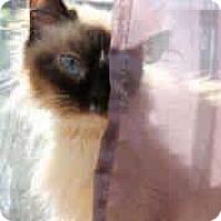 Adopt A Pet :: Angelina - Ennis, TX