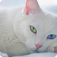 Adopt A Pet :: Ivan - Malta, OH