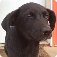 Adopt A Pet :: Andy - Buffalo, NY