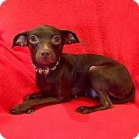 Adopt A Pet :: Elle Woods - Irvine, CA