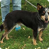 Adopt A Pet :: Clancy - Texico, IL