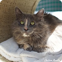 Adopt A Pet :: Ludwika - Los Angeles, CA
