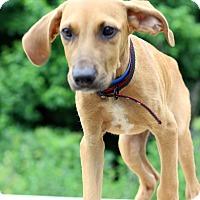 Adopt A Pet :: Jazz - Waldorf, MD