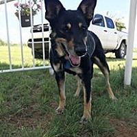 Adopt A Pet :: Luna - Snyder, TX