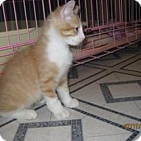 Adopt A Pet :: Ember - Glendale, AZ