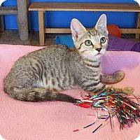 Adopt A Pet :: Chelsea - Glendale, AZ