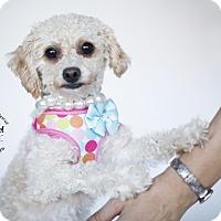 Adopt A Pet :: Clio - Aqua Dulce, CA
