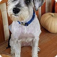 Adopt A Pet :: Dalton-ADOPTION PENDING!! - Rockville, MD