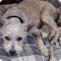 Adopt A Pet :: Elsa - Benton, PA