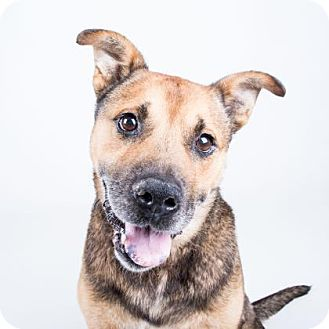 Shepherd (Unknown Type) Mix Dog for adoption in Adrian, Michigan - Umpa
