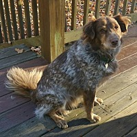 Adopt A Pet :: Bo - Louisville, KY
