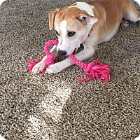Adopt A Pet :: Lucy - Elkton, FL