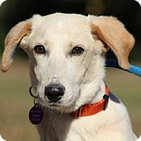 Adopt A Pet :: Sammy - Berkeley Heights, NJ