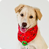 Terrier (Unknown Type, Small) Mix Puppy for adoption in Victoria, British Columbia - Crystal