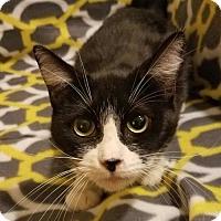 Adopt A Pet :: Princess Pudding - Aurora, CO