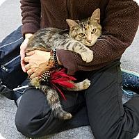 Adopt A Pet :: Carmela - Pasadena, CA