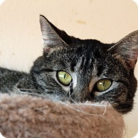 Adopt A Pet :: Sweetpea - St. Louis, MO