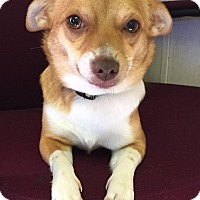Adopt A Pet :: Lulu - Savannah, GA