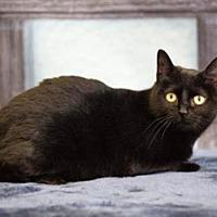 Adopt A Pet :: Bright - mishawaka, IN