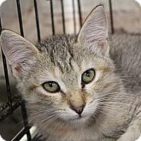 Adopt A Pet :: Dinah - Santa Monica, CA