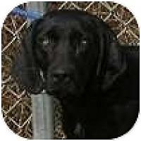 Adopt A Pet :: Jenny - Hamilton, ON