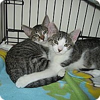 Adopt A Pet :: STONEY & BRIDGET - Hamilton, NJ