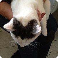 Adopt A Pet :: Squeakers - Monroe, GA