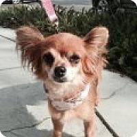 Adopt A Pet :: FERGIE - Atascadero, CA