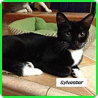 Adopt A Pet :: Sylvester - Miami, FL