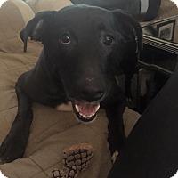 Adopt A Pet :: MADDIE - Birmingham, MI