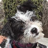 Adopt A Pet :: Suzy - La Costa, CA