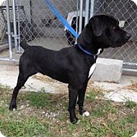 Adopt A Pet :: VITO - Oswego, IL